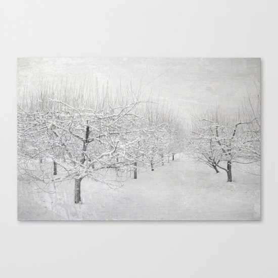 Winter Apple Orchard Canvas Print