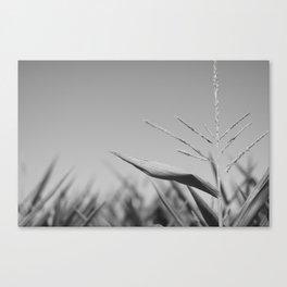 Corn Top Canvas Print