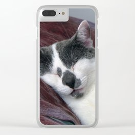 Cat Napping Clear iPhone Case