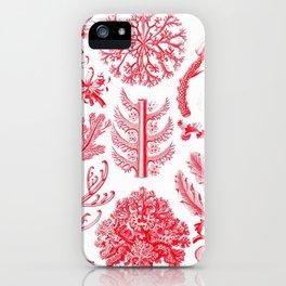 Ernst Haeckel Florideae Red Algae iPhone Case
