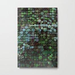 Field of Succulents Metal Print