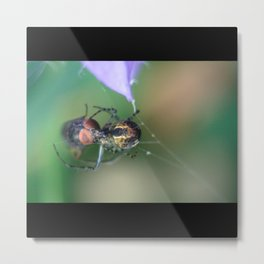 Spider And Fly Metal Print