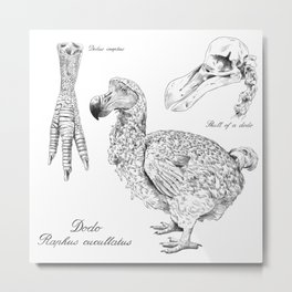 The last Dodo - scientific illustration Metal Print