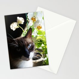Black and White Snowshoe Cat With Moth Orchid Stationery Cards