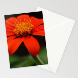 Red African Daisy Stationery Cards