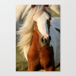 Raisin Canvas Print