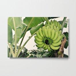 Costa Rican Bananas Metal Print