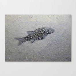 Semionotus Canvas Print