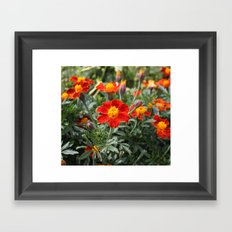 Fire Flower Framed Art Print
