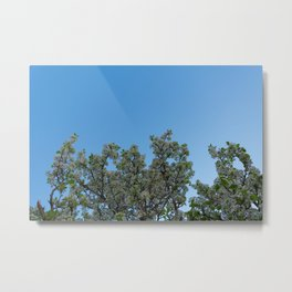 sky blossoms Metal Print