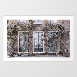 Wisteria Windows, Amsterdam Art Print