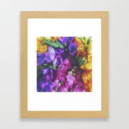 Freesias Framed Art Print