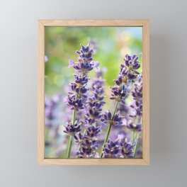 Lavender Flowers #1 #floral #art #society6 Framed Mini Art Print