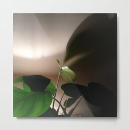 #Photo182 #202 Evening #LightStudy of my #Plants Metal Print