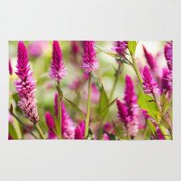 Colorful Celosia Rug