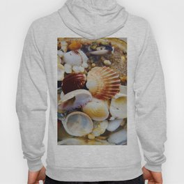 Sea Shells Hoody