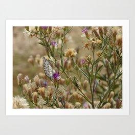 Butterfly Bush Art Print