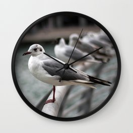Seagull bird 4 Wall Clock