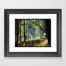 Forest Shadows Framed Art Print