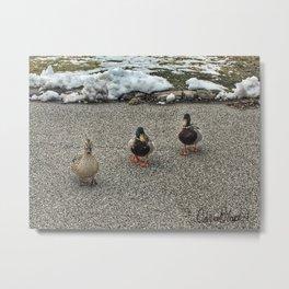Friendly Ducks at Vander Veer Botanical Park Metal Print