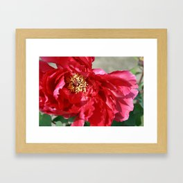 Tokyo Hama Rikyuu Koen Rose 2 Framed Art Print