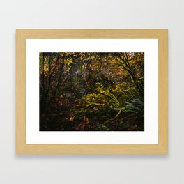 Oregon Forest III Framed Art Print