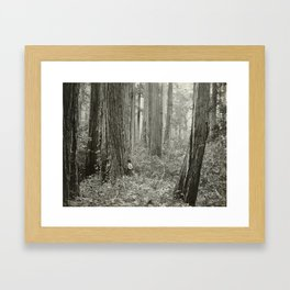 Big Basin Redwoods Forest by Andrew P. Hill, 1899 Framed Art Print