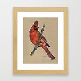 State Bird Series: West Virginia - Northern Cardinal Framed Art Print