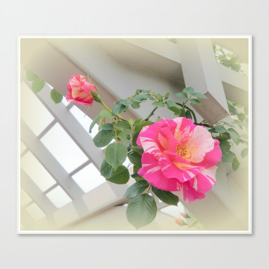 Peppermint Roses Canvas Print