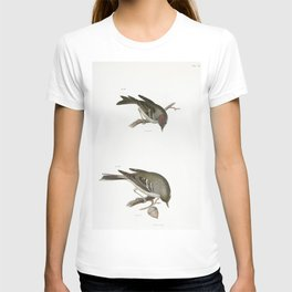 119 The Ruby-crowned Kinglet (Regulus calendula) 120 The Pine Warbler (Sylvicola pinus)  from Zoolog T-shirt