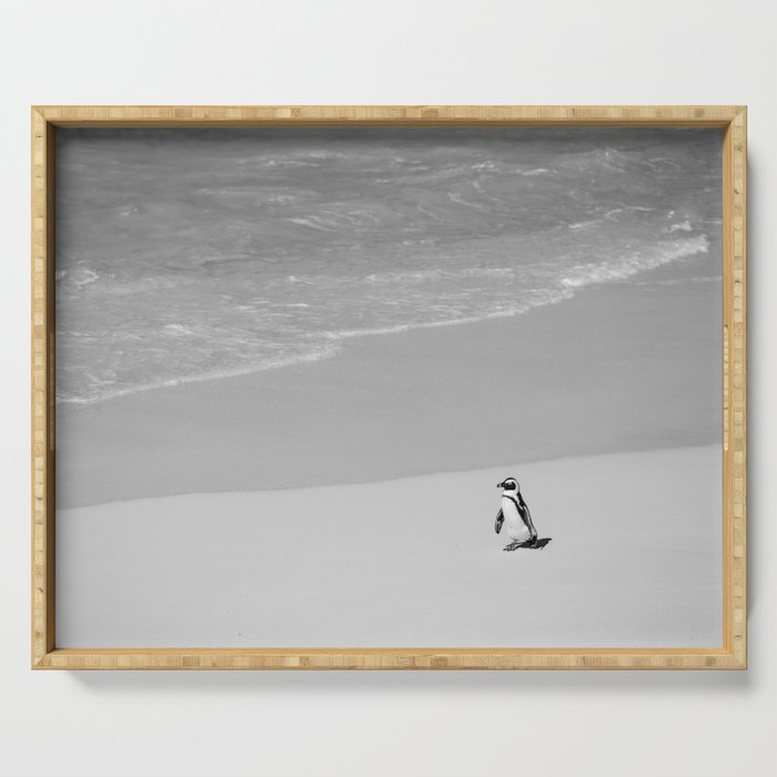 Lone African Penguin walking on beach Serving Tray