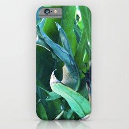 Fine Art Bird of Paradise Luxurious Leaves iPhone Case