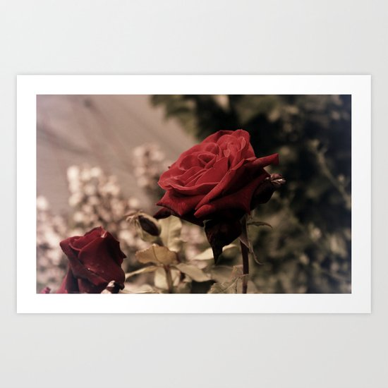 Vintage Red Rose Art Print