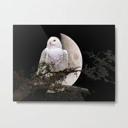 Snowy Owl A144 Metal Print