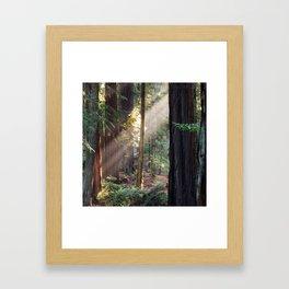 Hiding From The Dark Framed Art Print