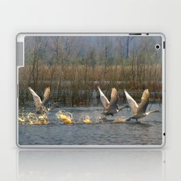 Three for Lift Off Laptop & iPad Skin