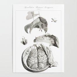Human Anatomy Art Print MENINGES BRAIN DISSECTION Vintage Anatomy, doctor medical art, Antique Book Poster