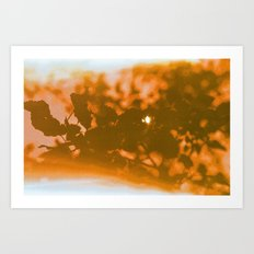 orange haze and white sunlight Art Print