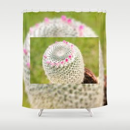 Cactus flowering pink detail blossoms Shower Curtain