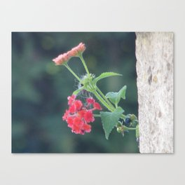 Red on the wall Canvas Print