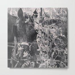 Amish Horse Black and White Metal Print