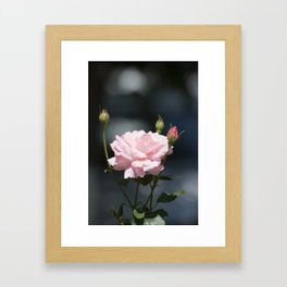 Like a rose Framed Art Print