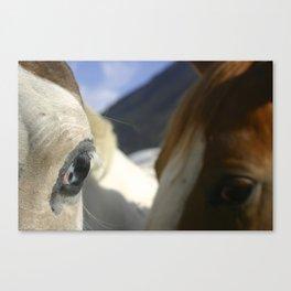 Horse Photo Canvas Print