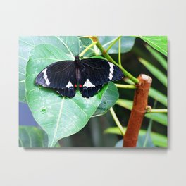 Citrus Butterfly Metal Print