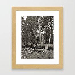 Timber Framed Art Print