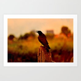 Crow on a Post at Sunset Art Print