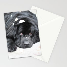 Bentley Bear Stationery Cards