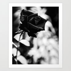black rose 2 Art Print