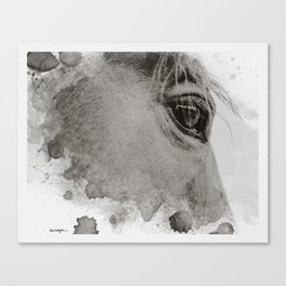 Limited Edition, Rico #1 Canvas Print