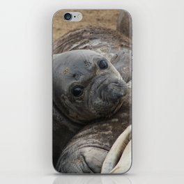 elephant seal pup iPhone Skin